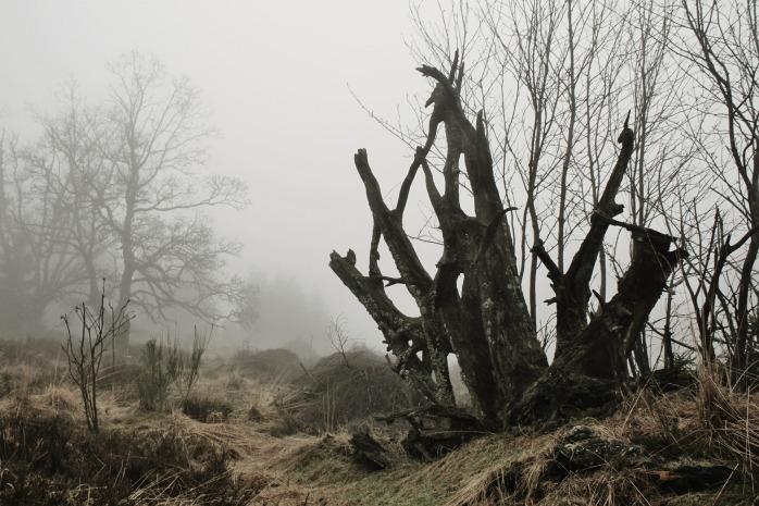 fog-530882_1920