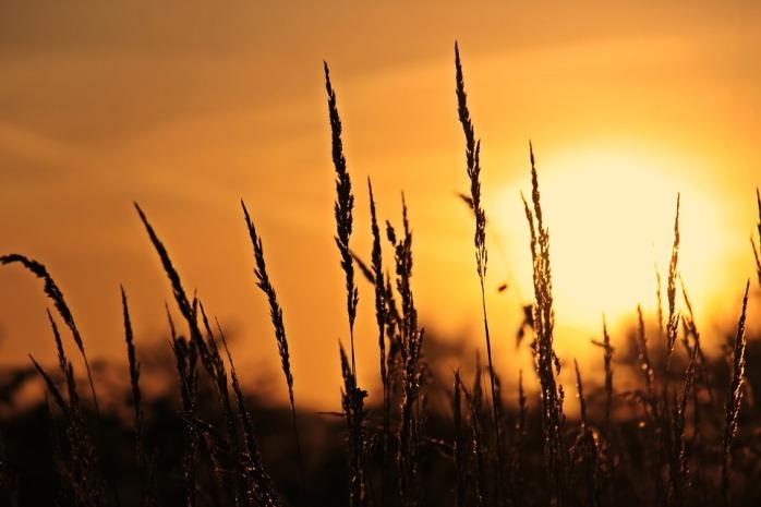sunrise-3712483_960_720.jpg